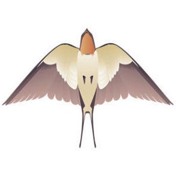 燕(ツバメ) - パブリックドメインQ:著作権フリー画像素材集