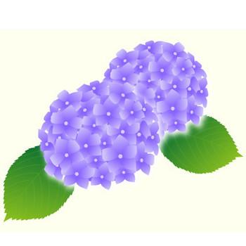 あじさい(紫陽花)のイラスト:無料画像の素材屋花子