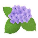 あじさい(紫陽花)フリーWEB素材のイラスト・画像集めてみた!