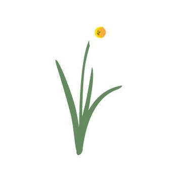 水仙の花イラスト2   花、植物イラスト Flode illustration (フロデイラスト)