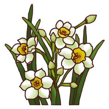 スイセン(水仙)カラー/冬の花2/花のイラスト/季節の花/お花と季節のお礼状