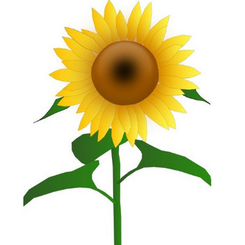 Sunflower Jh clip art Free vector in Open office drawing svg ( .svg ) vector illustration graphic art design format format for free download 200.88KB
