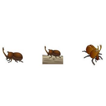 イラストポップ | 昆虫-かぶと虫のイラスト無料素材