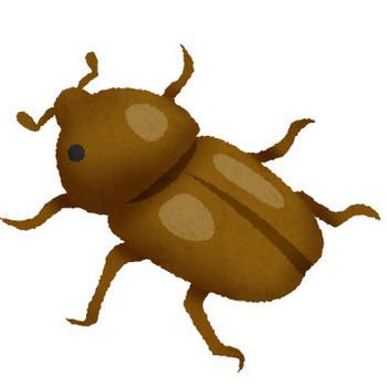 雌のカブトムシ | フリーイラスト素材 イラストリウム