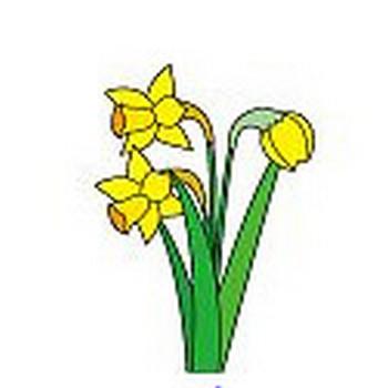 冬の花のイラスト1-花の無料イラスト素材-イラストポップ