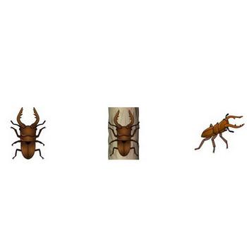 イラストポップ | 昆虫-クワガタムシのイラスト無料素材