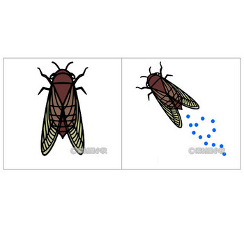 蝉(セミ)のイラスト | 素材屋小秋