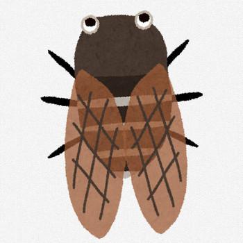 アブラゼミのイラスト(蝉) | かわいいフリー素材集 いらすとや