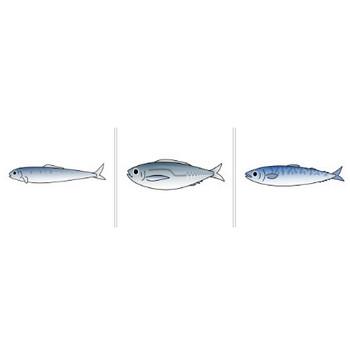 魚(サカナ)のイラスト|イラスト素材の素材ダス