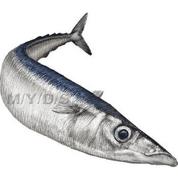 (秋刀魚)サンマのイラスト・条件付フリー素材集