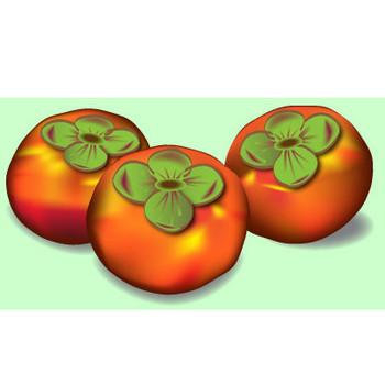 果物|無料イラスト|ダウンロード|PNG/柿