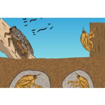 セミのイラスト - 土の中の幼虫と羽の生えた成虫 - チコデザ