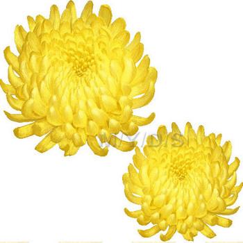 (キクの花)菊の花のイラスト・条件付フリー素材集