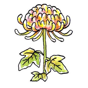 菊のイラスト | かわいいフリー素材が無料のイラストレイン