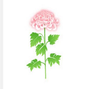 秋の花/菊の花の無料イラスト素材 - 花/素材/無料/イラスト/素材【花素材mayflower】モバイル/WEB/SNS