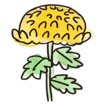 菊のイラスト(花): ゆるかわいい無料イラスト素材集
