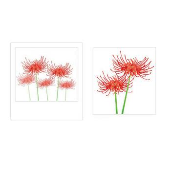彼岸花 | イラスト素材パラダイス 商用利用無料のイラスト素材