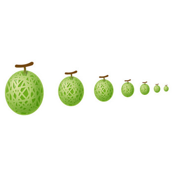 フルーツ-メロン - アイコン素材