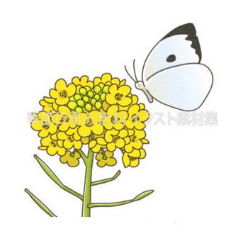 菜の花と蝶のイラスト | 季節行事の無料イラスト素材集
