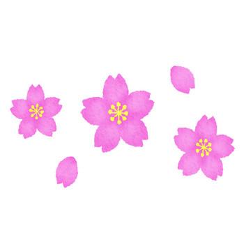 桜 | フリーイラスト素材 イラストラング