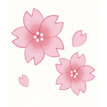 桜 | フリーイラスト素材のぴくらいく|商用利用可能です
