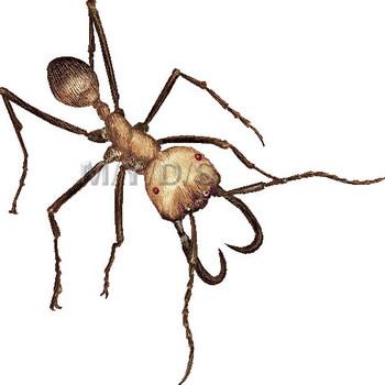 (軍隊蟻)グンタイアリのイラスト・条件付フリー素材集