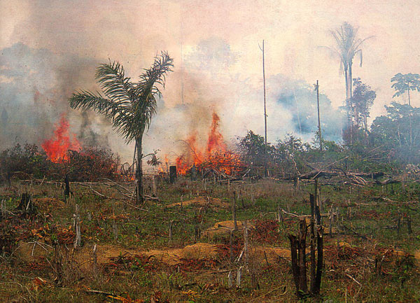 Burning and deforestation of the Amazon forest to make grazing lands.