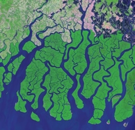 Development and agricultural clearing (pink areas) are shown encroaching the Sundarbans mangroves along the Bay of Bengal in this Landsat 8 image taken in March 2014.