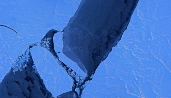 Inconvenient finding: Melting sea ice may lead to more life