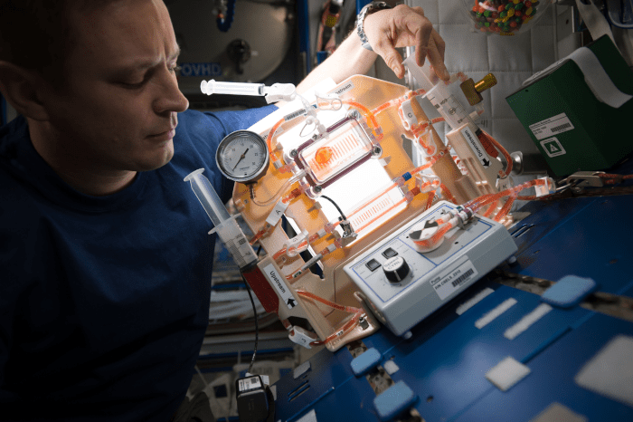 astronaut Jack Fischer sets up hardware for the Capillary Structures investigation
