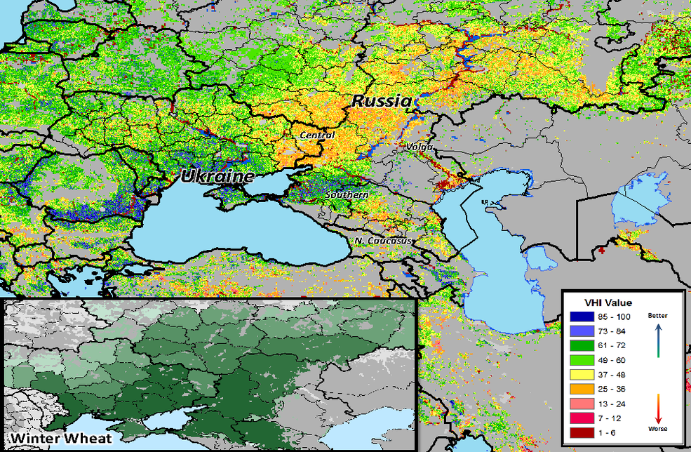 Winter wheat in Russia from May 2021