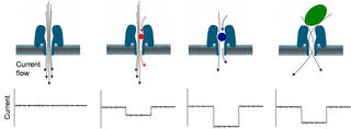 In nanopore sensing, just as water flows through a drain, an ionic current flows through a nanopore.