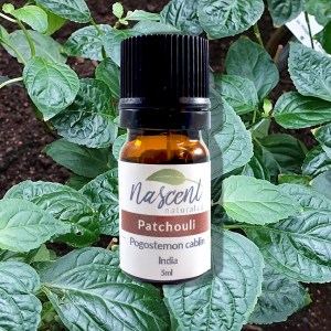 A 5 milliliter bottle of Patchouli essential oil in front of a photo background of a Patchouli plant