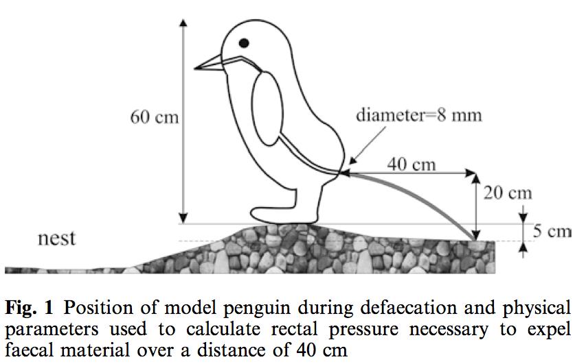 Projectile Penguin Poop Paper