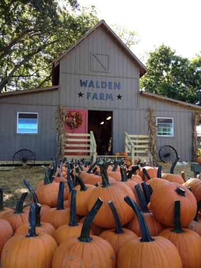 Photo courtesy of Walden Farms