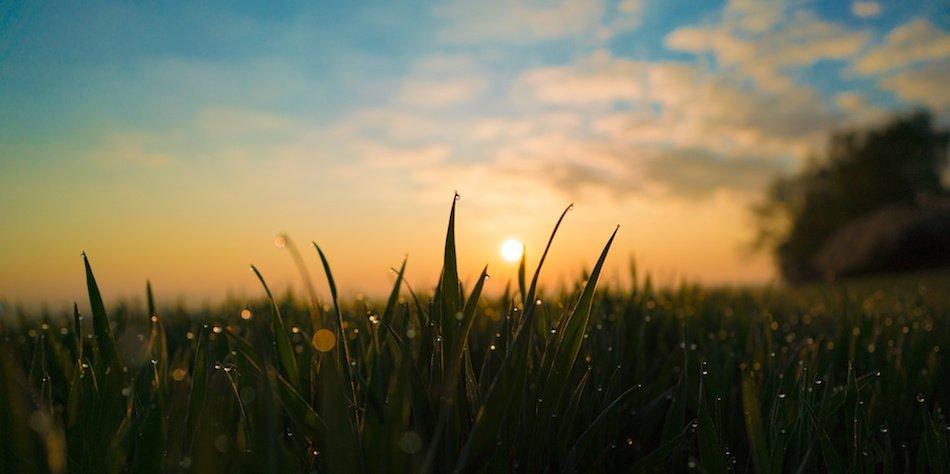 Watering Lawn at Dawn