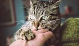 Kedi Davranış Problemleri