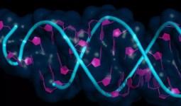 Epigenetik Psikolojimizi Nasıl Etkiliyor?