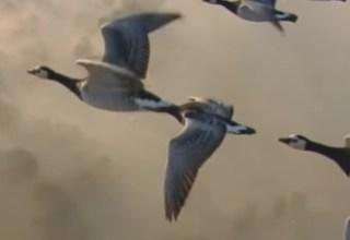 Kuşlar Neden Geceleri Göç Eder?