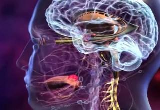 İnsan Beyni Ve Hafızası Nasıl Çalışır?