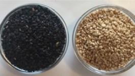 til-sesame seeds