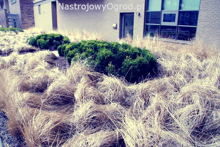 ogród-trawy-2
