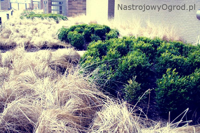 ogród-trawy-3