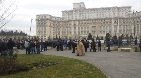 protest_ciobani_numar_caini_34085700