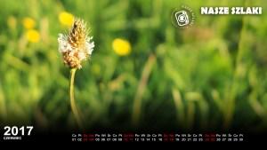 tapeta-ekran-komputer-fulhd-łąka-zieleń-kwiaty