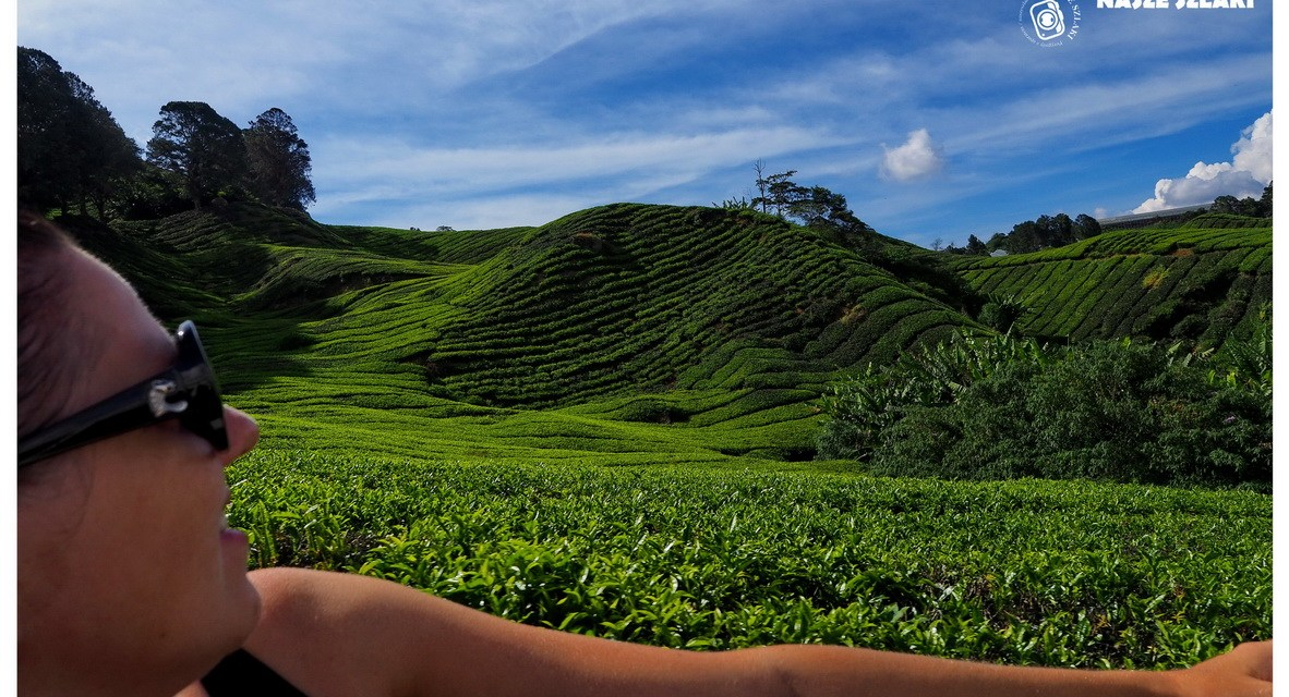 Cameron Highlands – Malezja