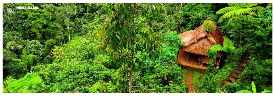 Chata na wsi w Indonezji na Bali. Pola herbaty, kawy i plantacje owoców a także pola ryżowe. Upalny i wilgotny dzień.