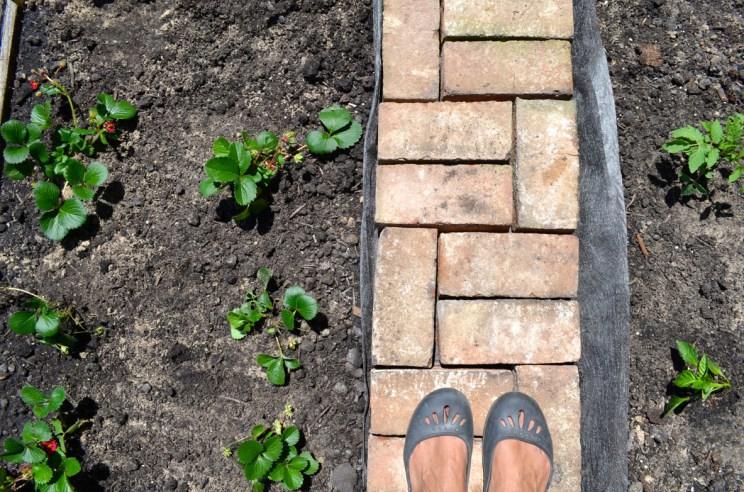 Garden vegetable, Mama ía