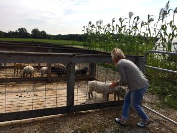 Joseph Decuis Farm, Mama ía blog