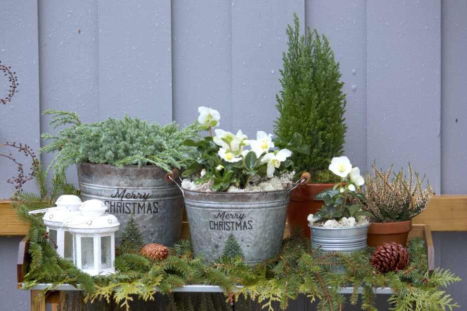 trädgårdsstyling vinter julros natalia lindberg